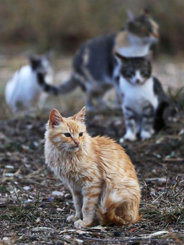 El Ayuntamiento de Quesada (Jaén) sanciona la alimentación de animales en la vía pública