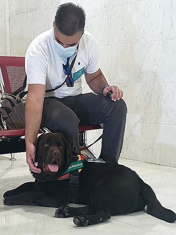 Activan en Granada el primer protocolo para el acceso de los perros de asistencia sanitaria a un hospital andaluz