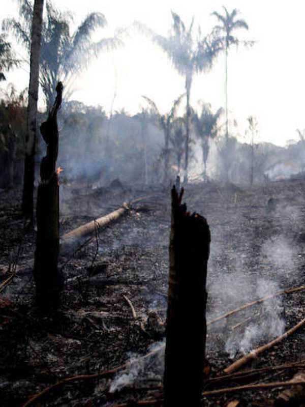 El 83 por ciento de los brasileños asegura sentir preocupación por la situación actual del Amazonas