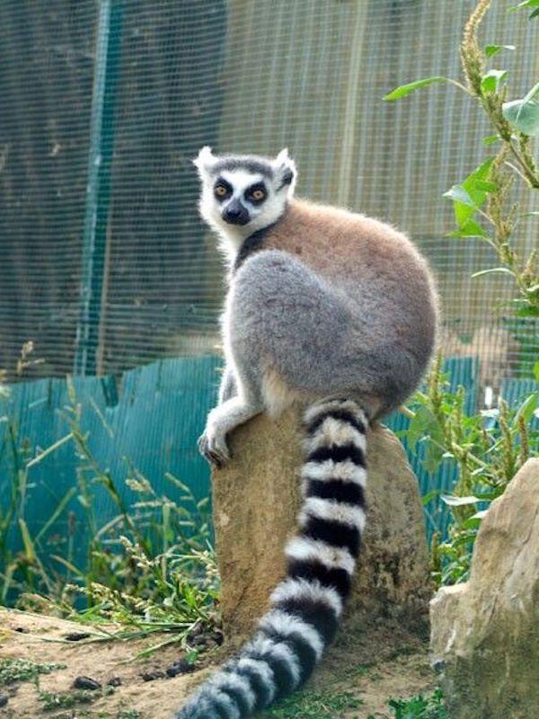 Naturaleza, la vergüenza nacional del 'Zoo de Almuñécar'
