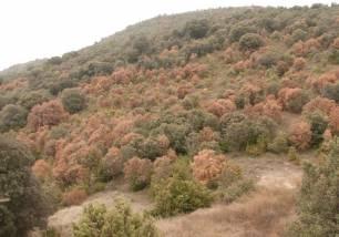 Cambio climático. Los ecosistemas mediterráneos se calientan un 20% más rápido que la media mundial