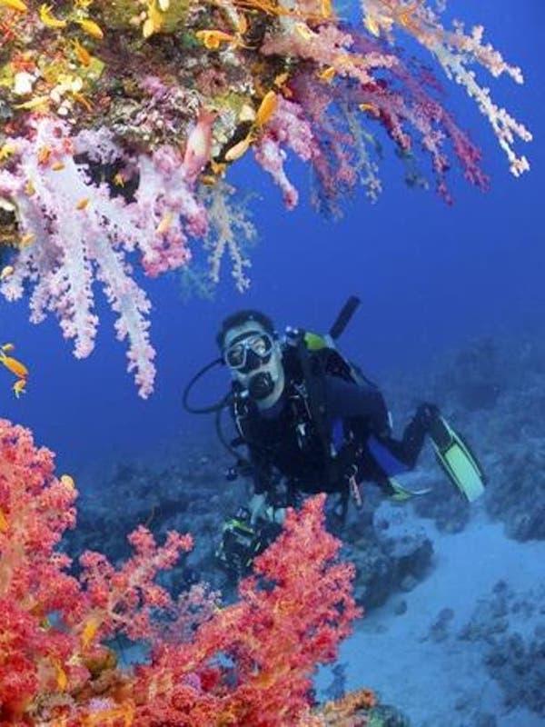 Un alga destructiva se ceba con los arrecifes de coral en el Caribe