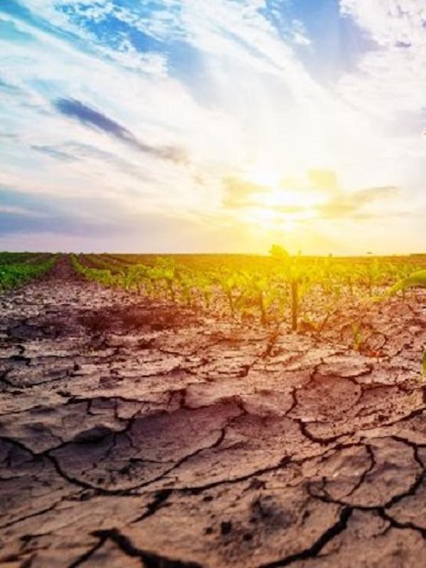 Cambio climático. Greenpeace 'arremete' contra varias compañías españolas 'trileras' en su lucha contra el calentamiento global