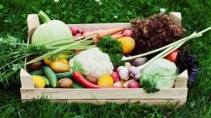 Alimentos ecológicos, un tercio de la viña catalana es ecológica