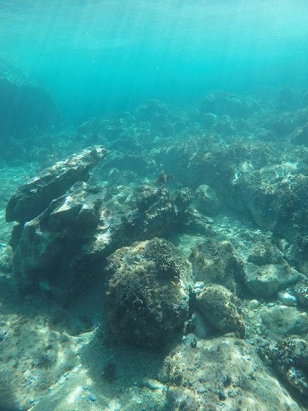 Naturaleza y la vida microbiana bajo el lecho marino