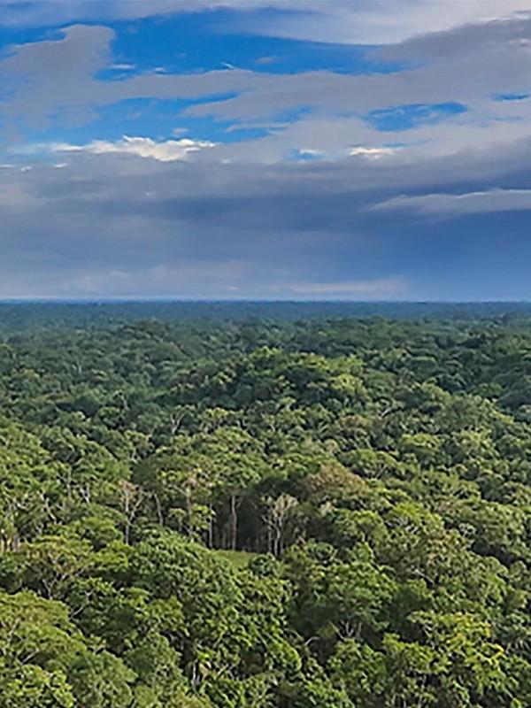 Naturaleza, información pública del Real Decreto sobre conservación de recursos genéticos forestales y de flora silvestre