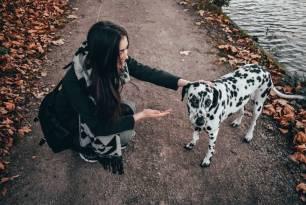 Animales de compañía. Identifican una proteína como potencial diana terapéutica para vacunas contra la leishmaniosis