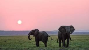 La 'vergüenza' de Namibia que pone en venta sus elefantes para reducir su población