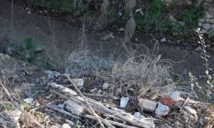 Murcia, peces muertos en la acequia mayor de Barreras