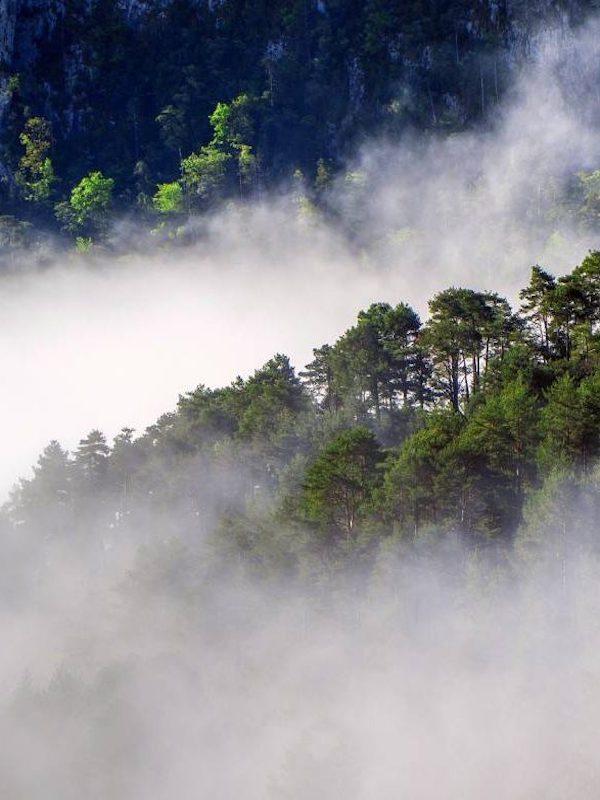 Una civilización precolonial ya realizó cambios en la selva amazónica hace miles de años