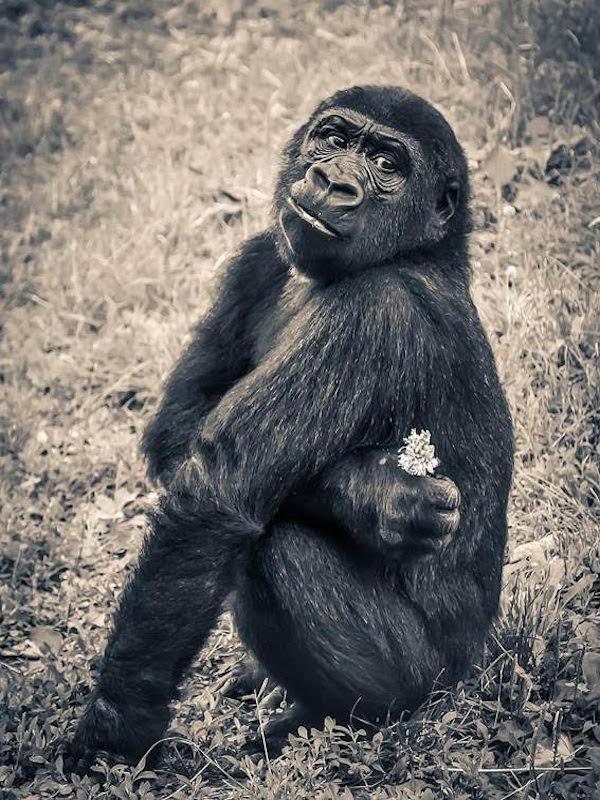 Día Mundial del Mono 2020, ECOticias.com se suma al evento