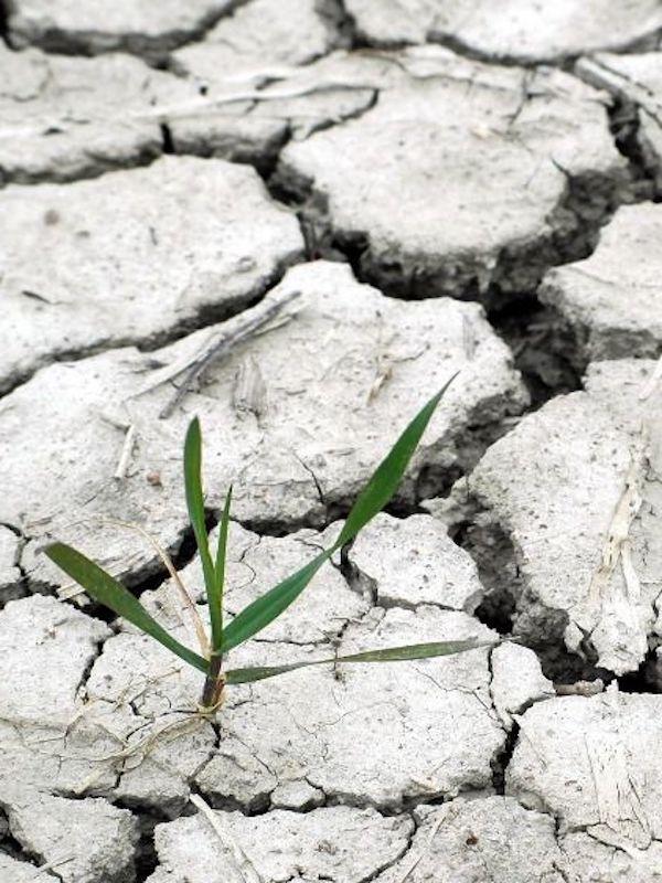 CO2. Demanda contra el Gobierno de España por falta de acción climática