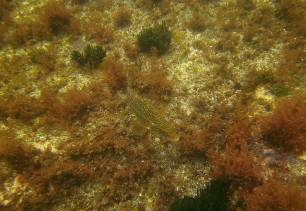 La pesca modifica el comportamiento y las características de los peces en los ecosistemas explotados