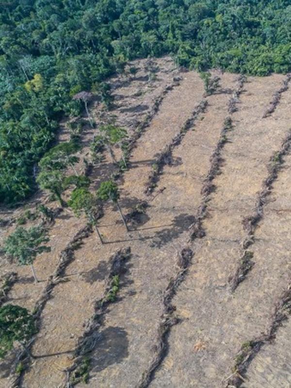 La desforestación provocó los incendios masivos en la selva amazónica durante 2019