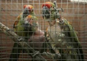 Canarias, acción contra el tráfico ilegal de animales