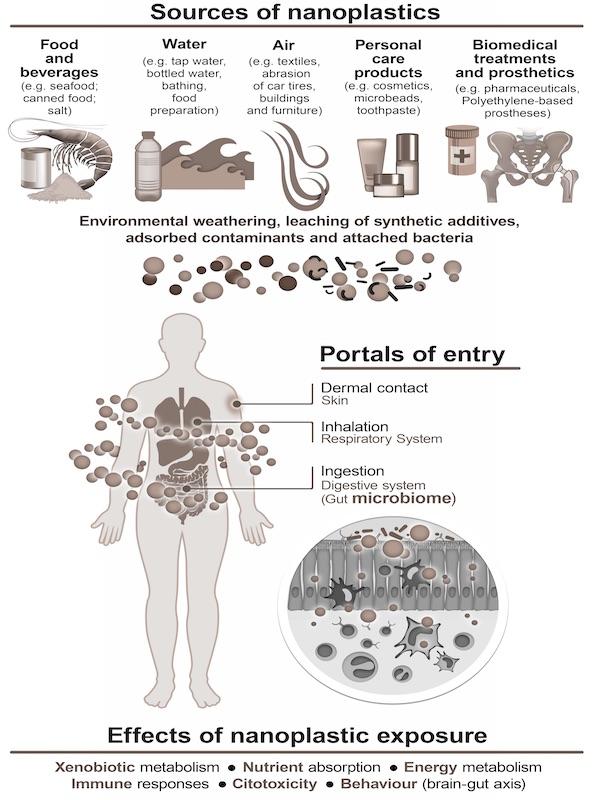 Residuos. Los nanoplásticos alteran el microbioma intestinal