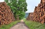 Tecnología verde para reducir la contaminación asociada a la industria papelera
