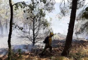 Economía circular para tratamientos selvícolas para minimizar los riesgos de incendios forestales
