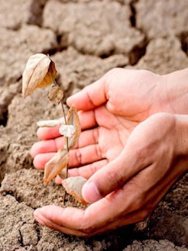 El AMB (Barcelona) encara 2021 con un presupuesto contra el cambio climatico