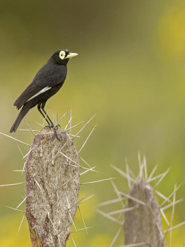 Los entornos extremos de la Tierra son los más favorables para que surjan nuevas especies