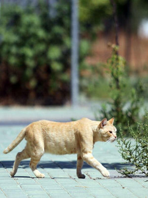 Almería aprueba capturar y esterilizar a los gatos
