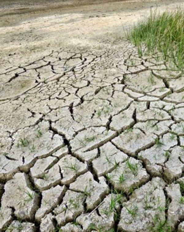 El Cabildo declarará el estado de 'crisis climática' en La Palma