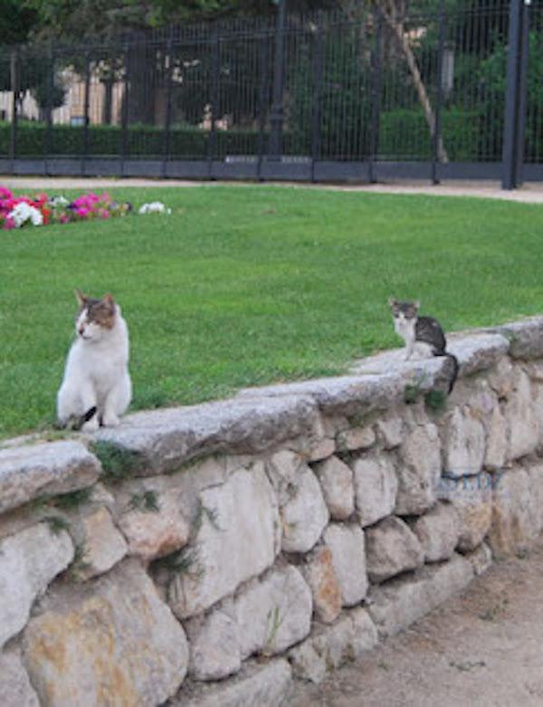 Gestión de colonias felinas en Zamora