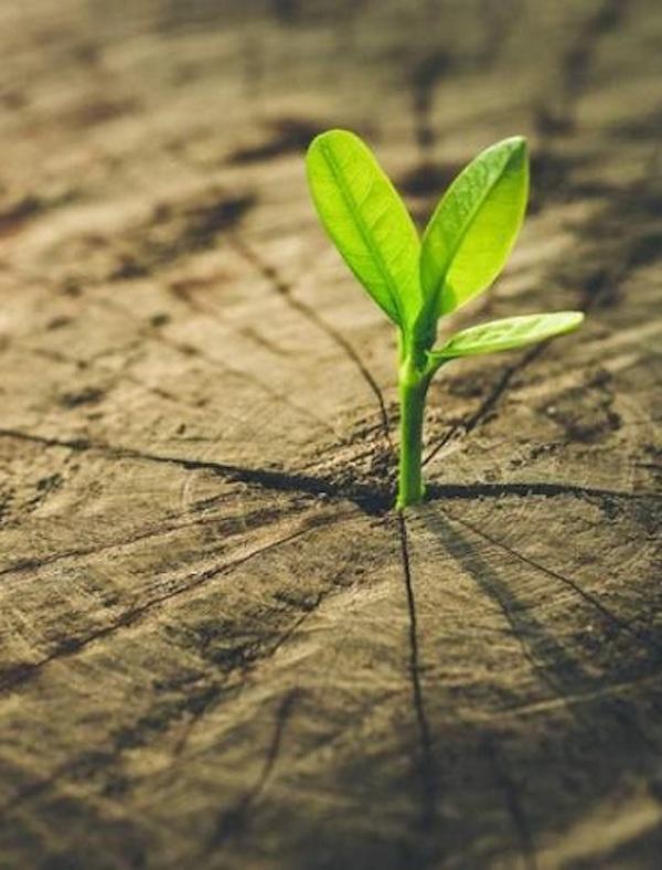 NaturClima, una iniciátiva del Gobierno de Navarra sobre la vulnerabilidad de los espacios protegidos frente a la 'crisis climática'