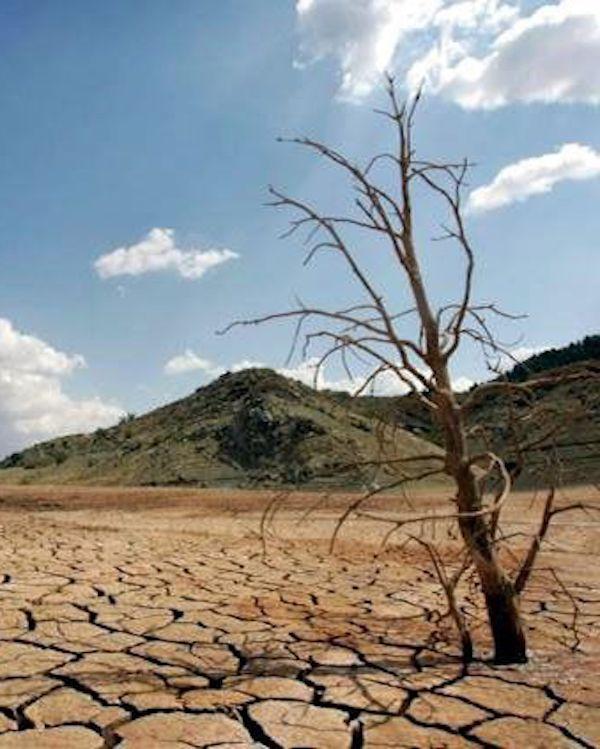El obispo de Córdoba y la 'crisis climática'