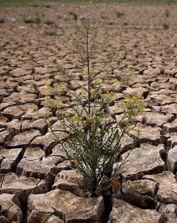 ¿Por qué PP-A, Cs y Vox 'boicotean' la medida de 'crisis climática' en Andalucía?