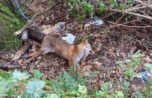 Un delincuente investigado por la colocación de lazos para la caza furtiva en un monte gallego