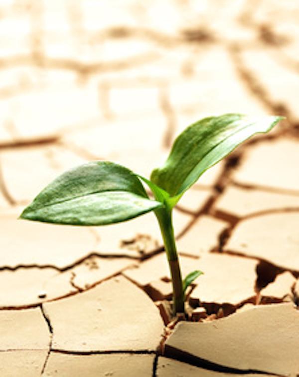 Andalucía anima a las empresas a apostar contra la 'crisis climatica' y sumarse al registro EMAS