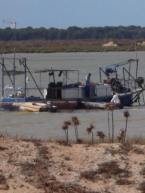 El problema de la pesca 'ilegal' en el Estuario del Guadalquivir