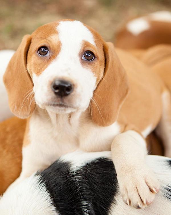 ¿Qué medidas va adoptar el Gobierno contra la cría y el comercio ilegal de animales de compañía?