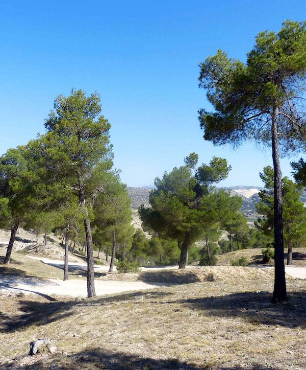 Las empresas murcianas 'pueden y deben' involucrarse en el proyecto LIFE Forest CO2