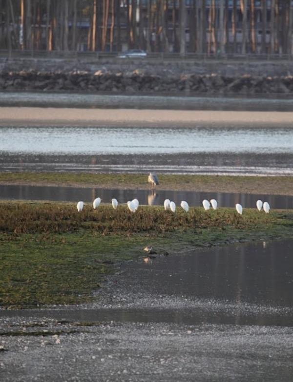 Asturias. Demasiados años lleva la reserva de la Ría de Villaviciosa cerrada por contaminación de sus aguas