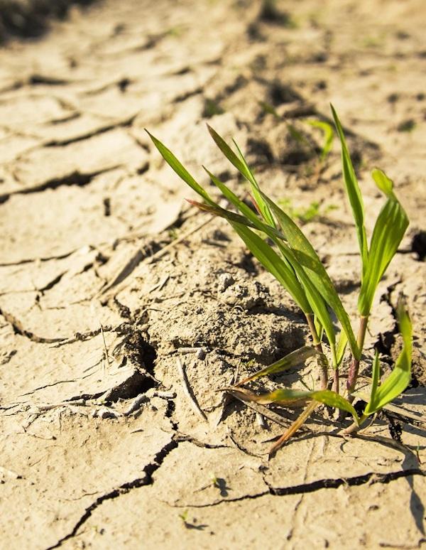 El cambio climático provocará cambios brutales en los ecosistemas áridos
