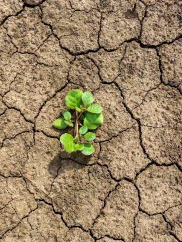 La oruga procesionaria se adelanta por la 'crisis climática'