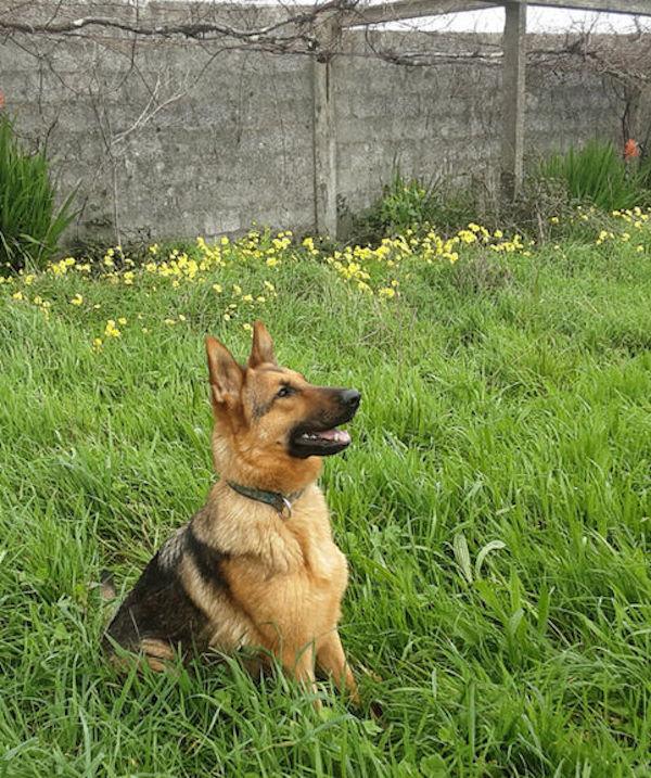 Trasladarán 'perros adiestrados de España' al Congo para luchar contra el tráfico ilegal de especies