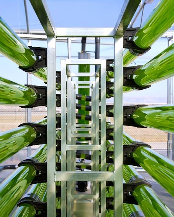 ¿Convertir biomasa de microalgas en biocombustible?