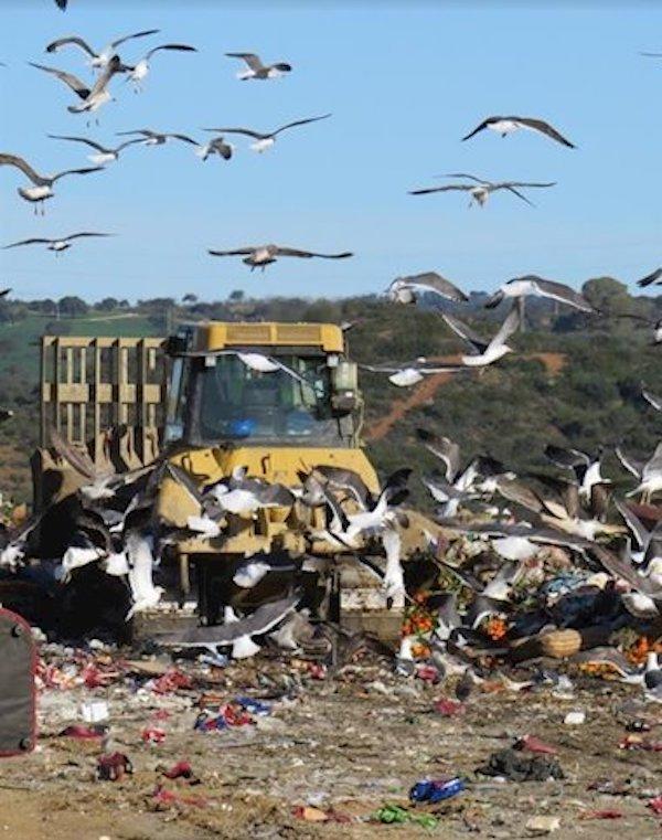 El Gobierno trabaja con las CCAA para armonizar los datos de residuos y vertederos en un registro único y compartido
