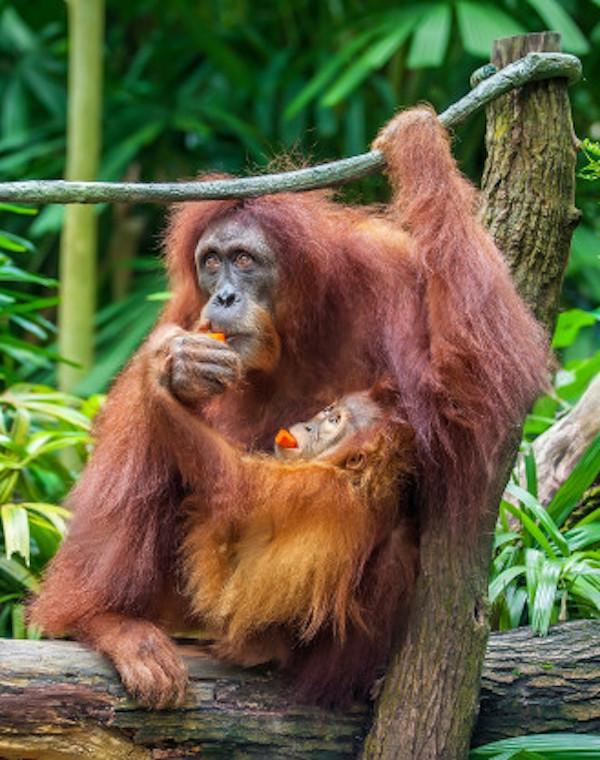 La caza y el cambio en el uso del suelo afectan negativamente a más de 1.800 mamíferos tropicales