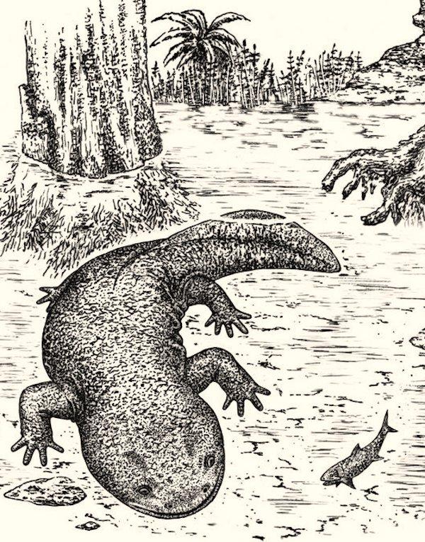 Nueva especie de salamandra que vivió hace 166 millones de años