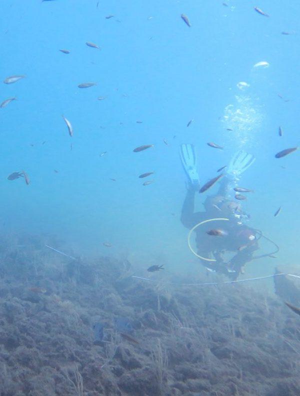 Un índice mide la eficacia de las reservas marinas para proteger la biodiversidad