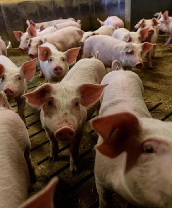 Ya basta con los 'usos y abusos' de la ganadería industrial