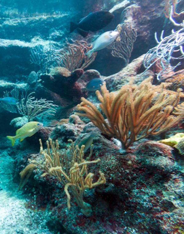 Los arrecifes de coral 'con fecha de caducidad' en 2100