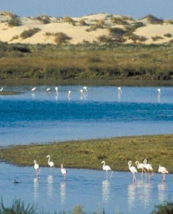 Expertos de todo el mundo visitarán Doñana (Huelva) para examinar su estado
