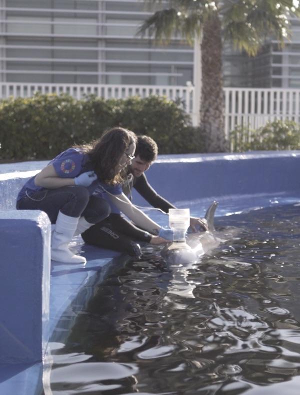 Tecnología verde pionera detecta enfermedades respiratorias en delfines de manera rápida, eficaz y no invasiva