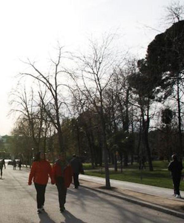 Madrid constituye la 'Mesa del Árbol'
