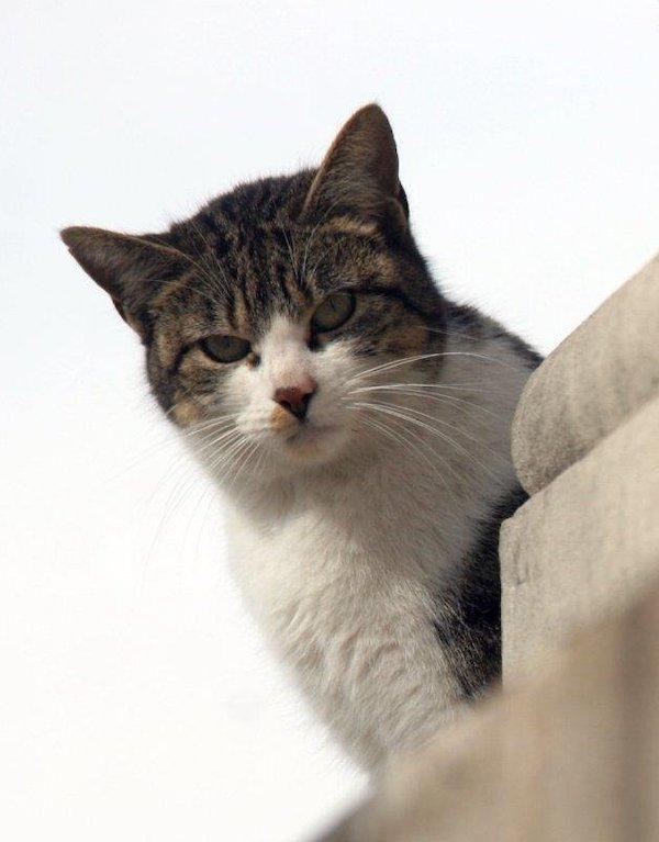Efectos calmantes de la música compuesta específicamente para gatos